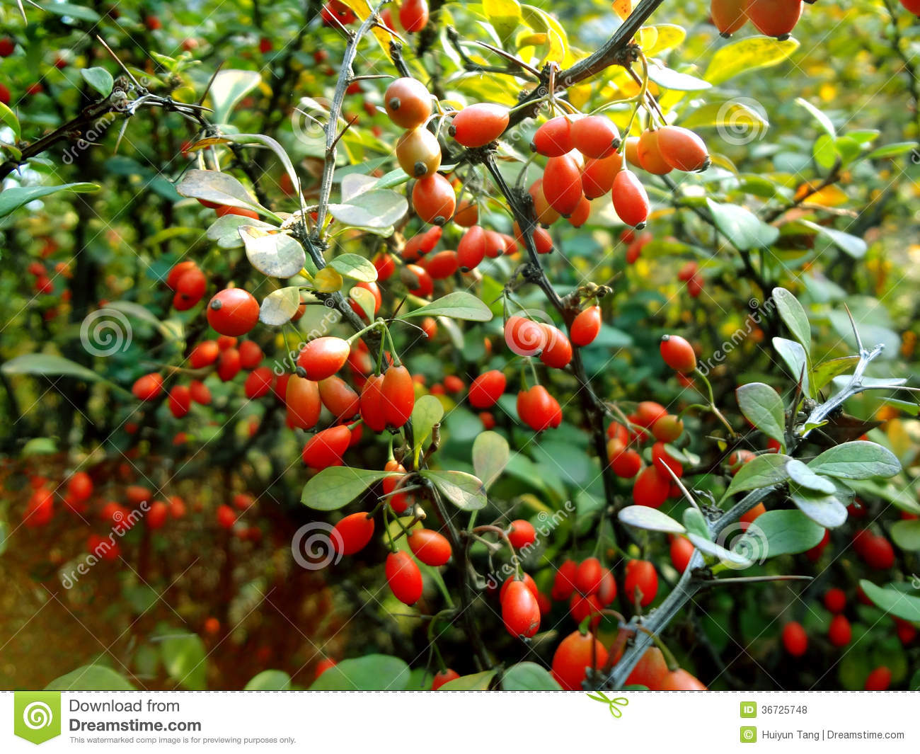 Fruits Tree Pictures Free Download