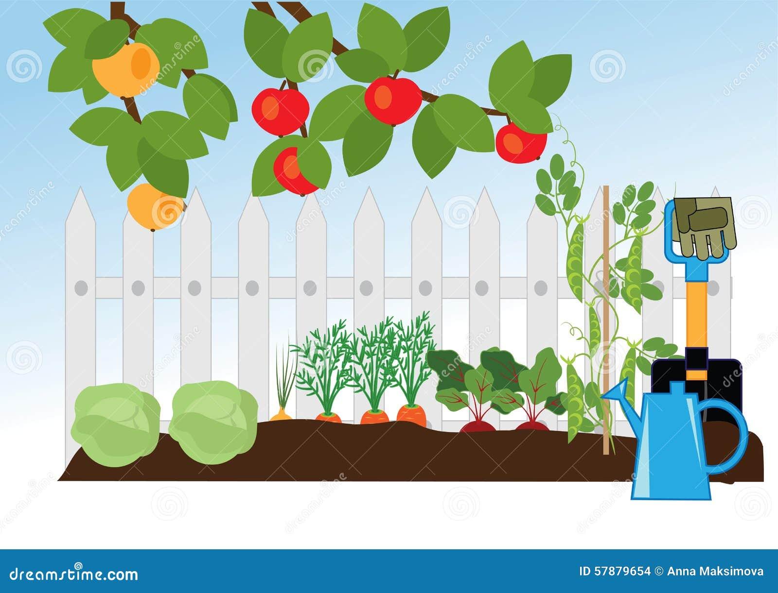 Fruit and vegetable garden stock vector image 57879654 for Fruit and vegetable garden