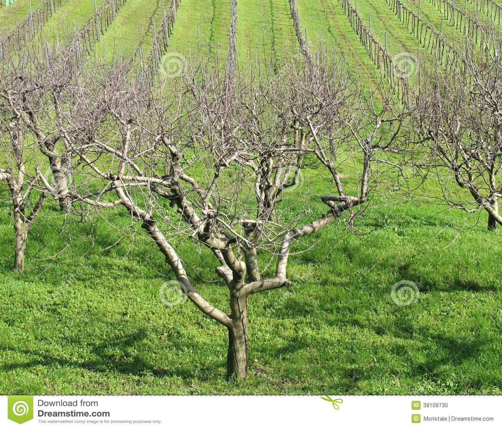 Fruitbomen en wijngaarden