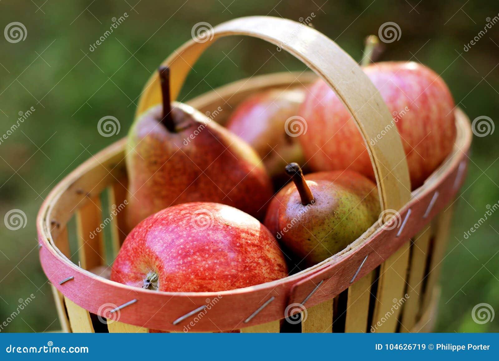 Download Fruitmand Met Appelen En Peren Stock Afbeelding - Afbeelding bestaande uit dieet, geoogst: 104626719