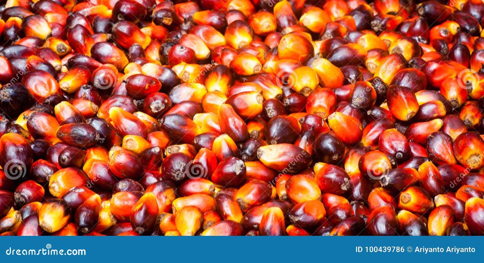 Fruits d huile de palme