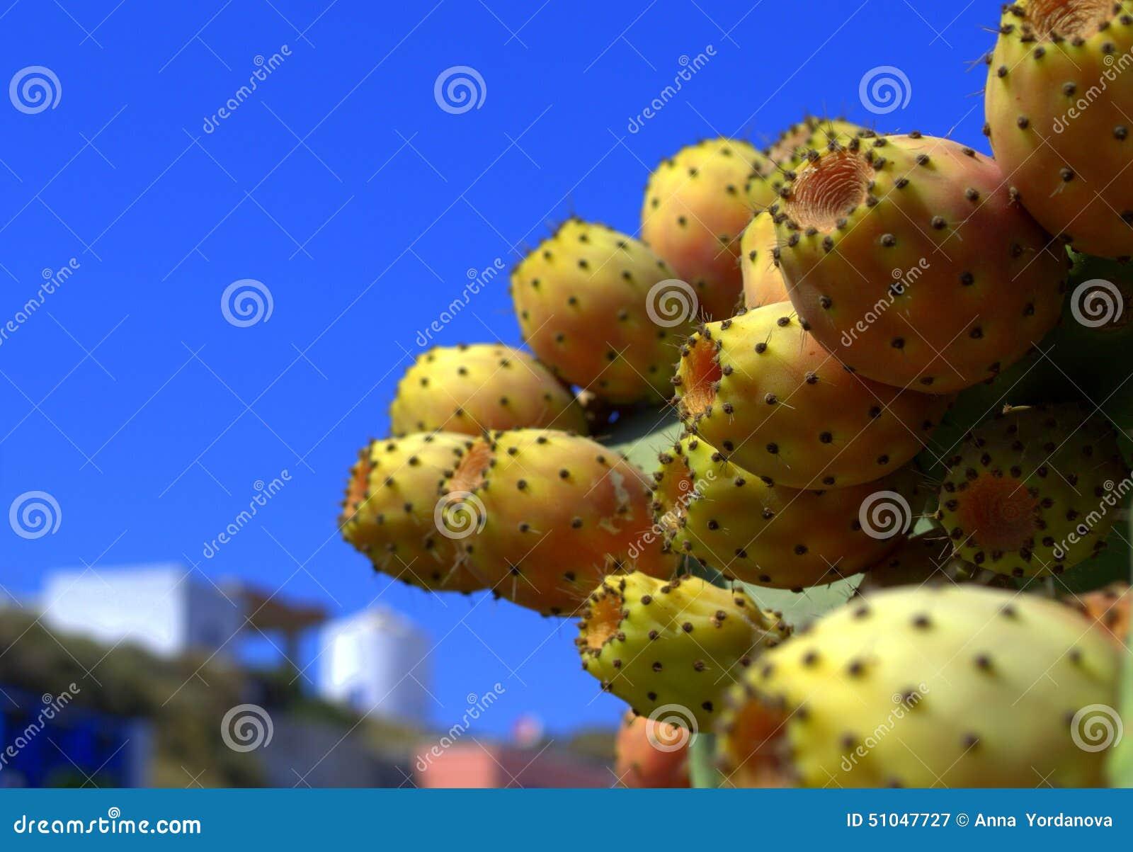 Fruits de cactus