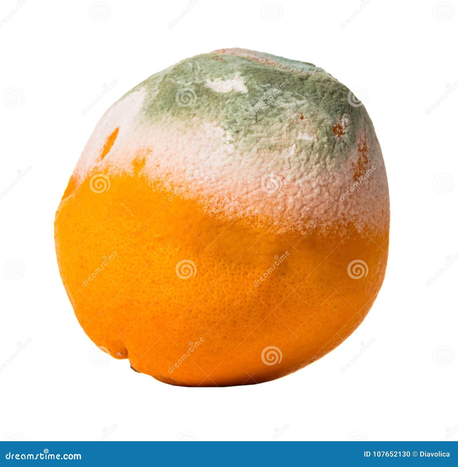 Fruitsinaasappel met schimmel wordt behandeld die