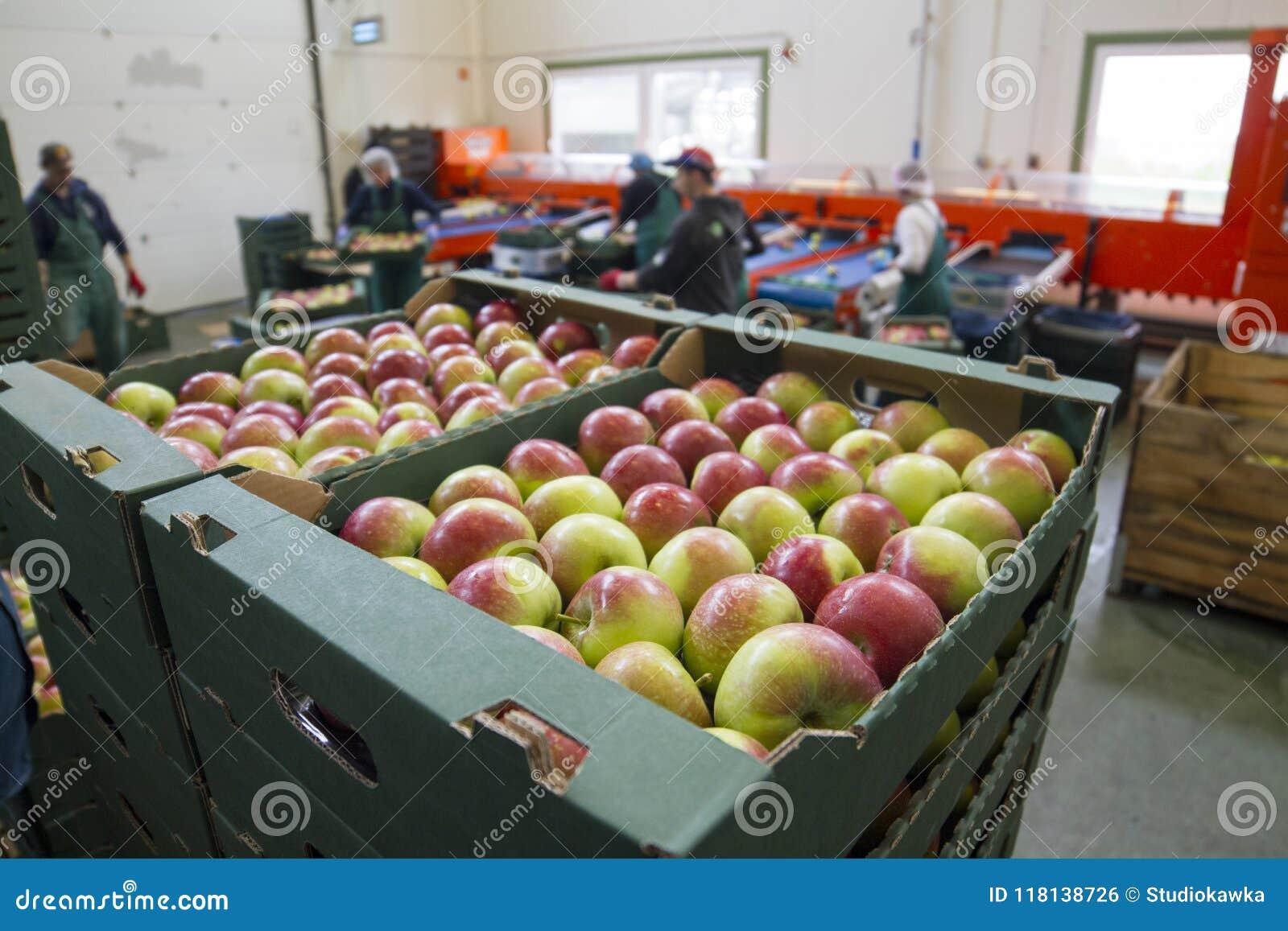 Fruitverwerkingsinstallatie, Polen, Lubelskie, 08 2014