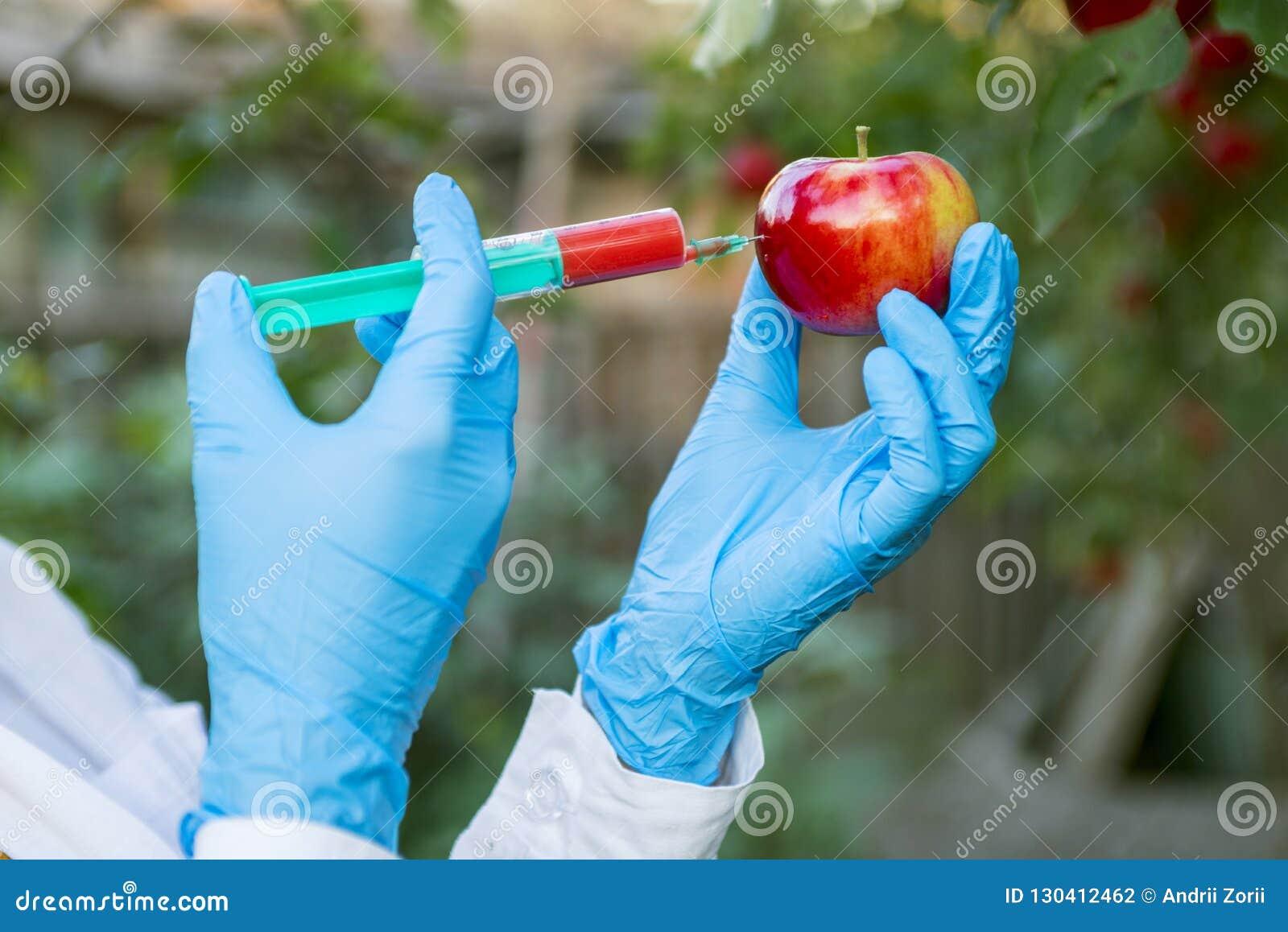 Frukt för handinnehaväpple med injektionssprutan med kemiska gödningsmedel av röd färg i äpple GMO och bekämpningsmedeländring fo