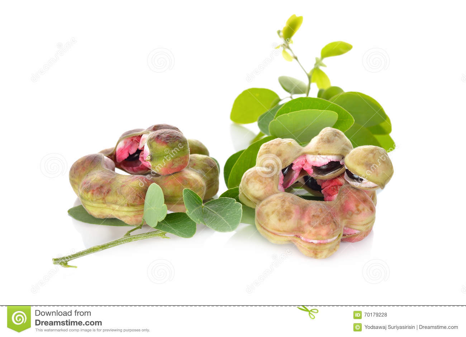 Frukt för Manila tamarindfrukt med bladet på vit