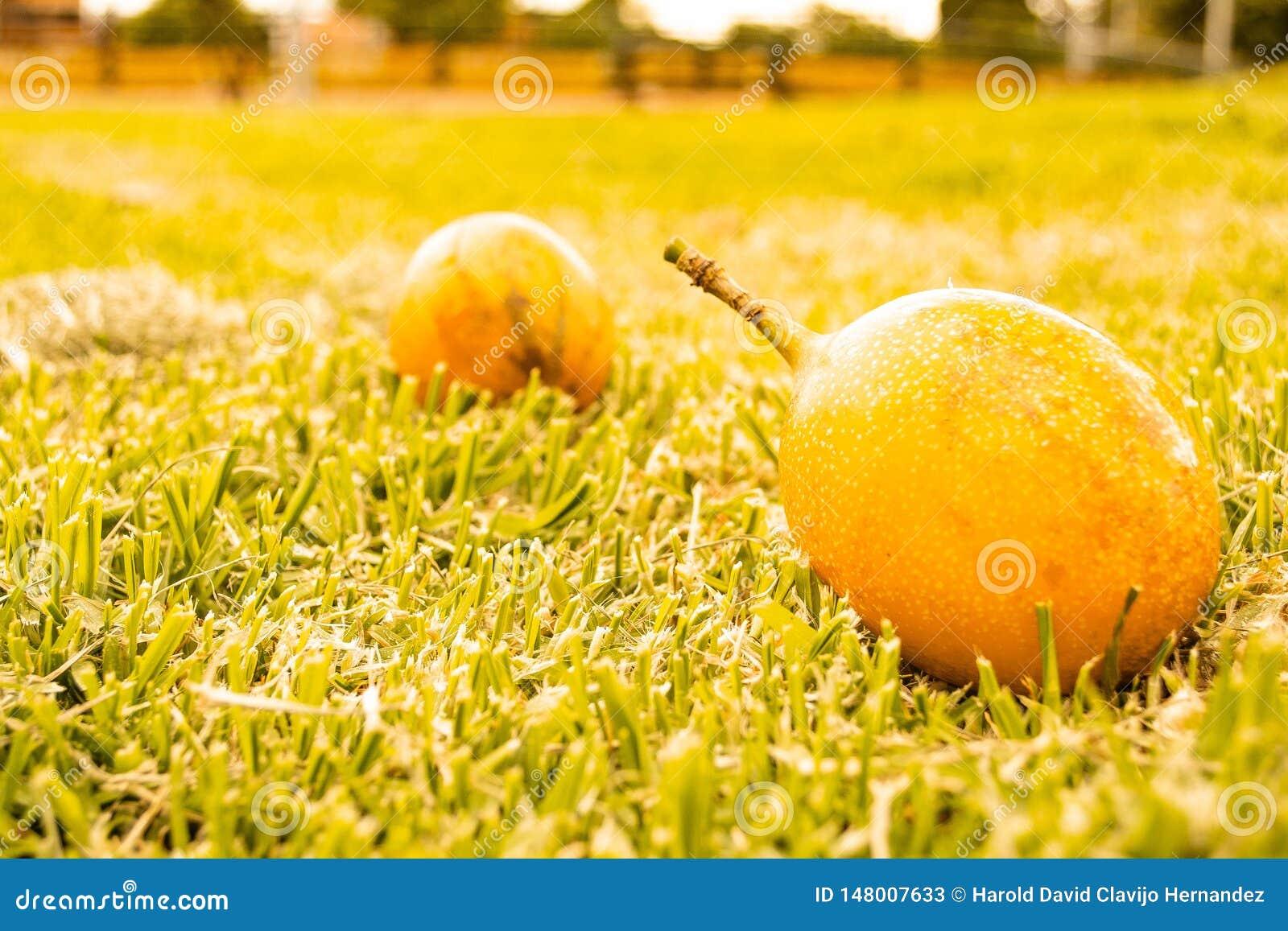 Frukt i gräset