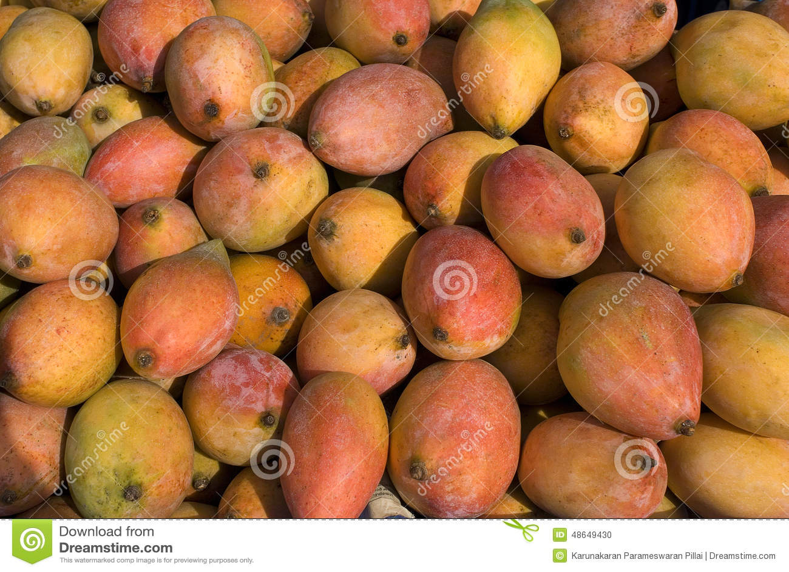 Frukt-mango