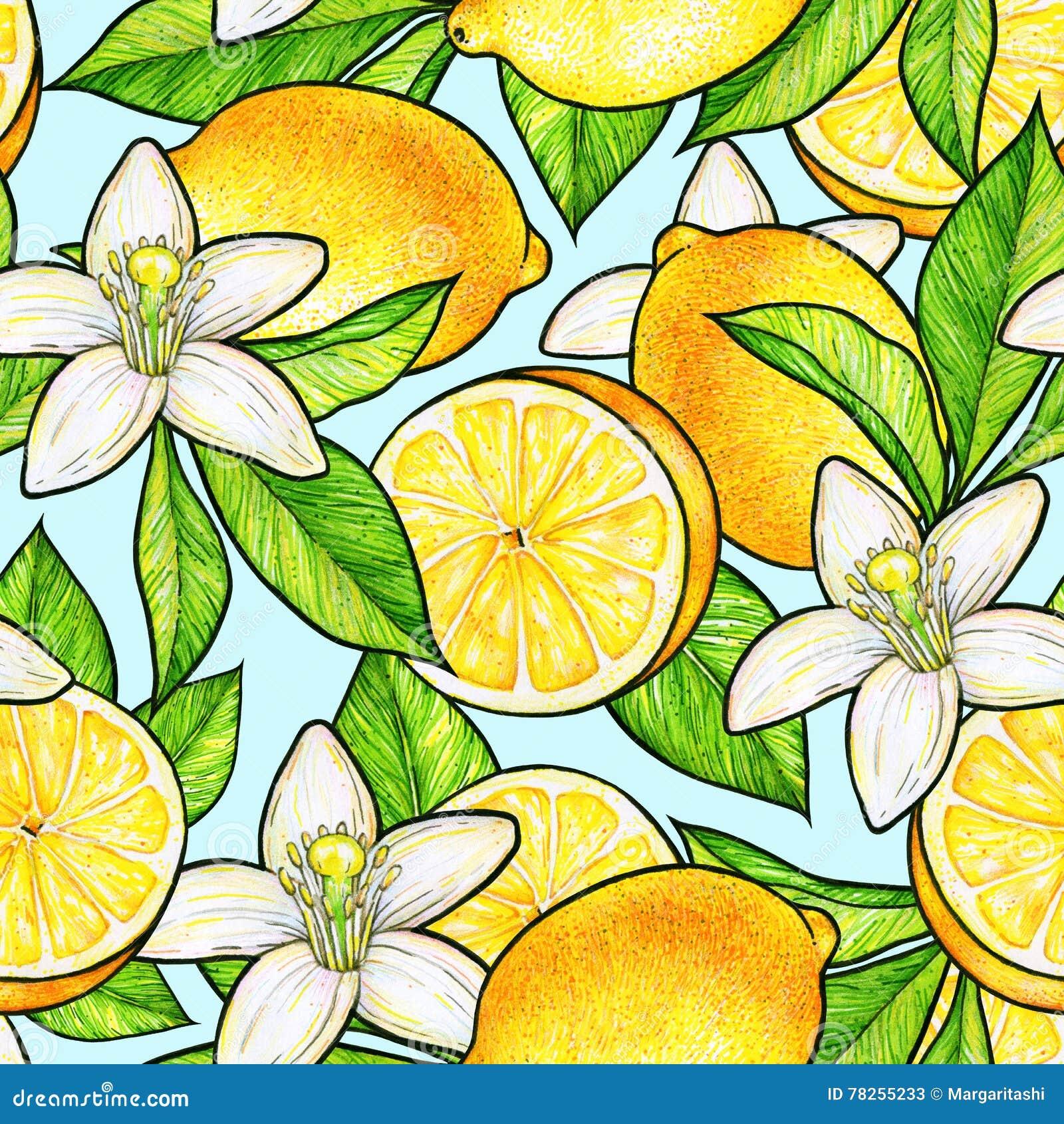 Fruta Cítrica De Las Frutas Amarillas Hermosas Del Limón Y