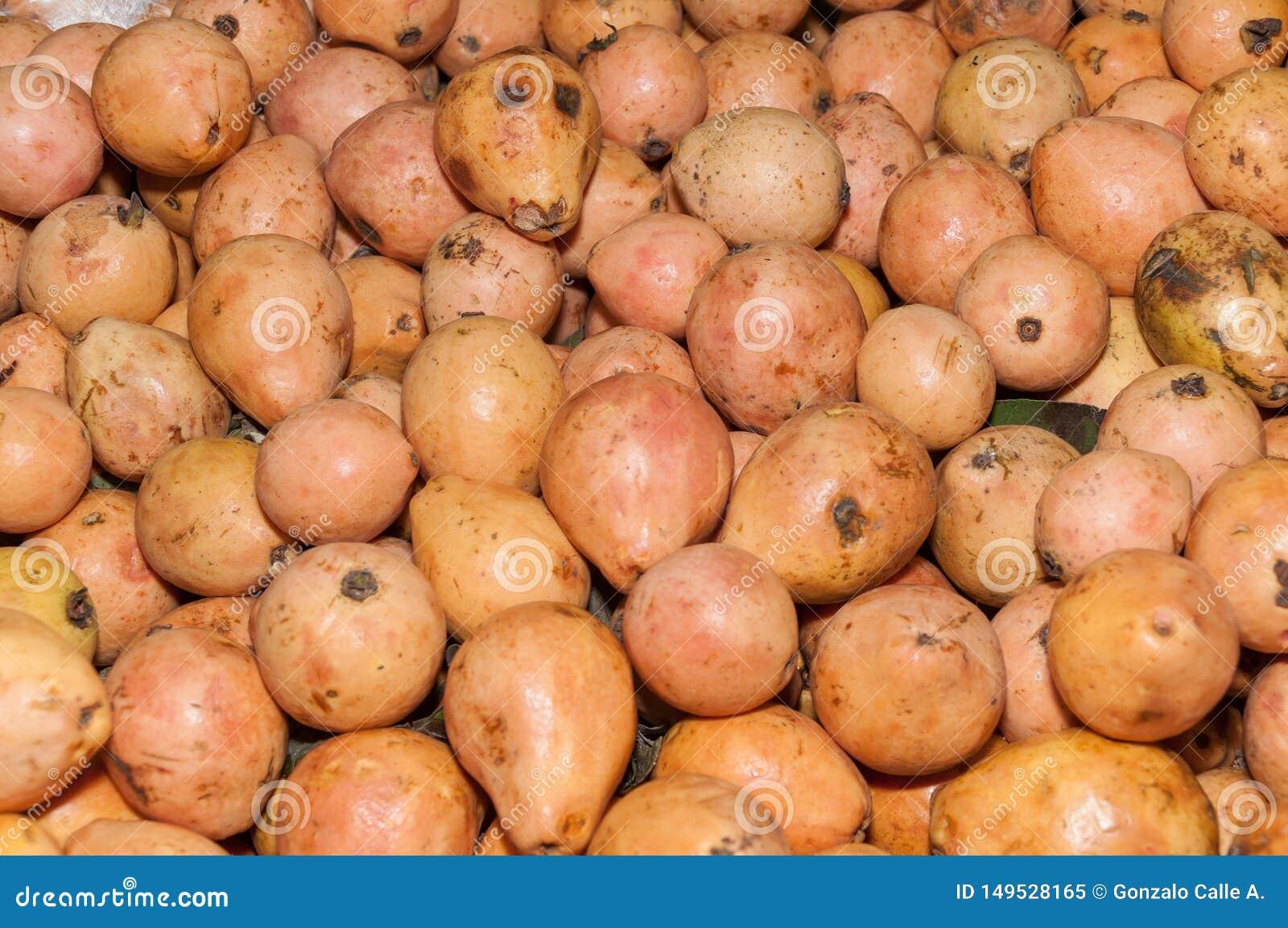 Fruta de guayaba en el supermercado - guajava del Psidium