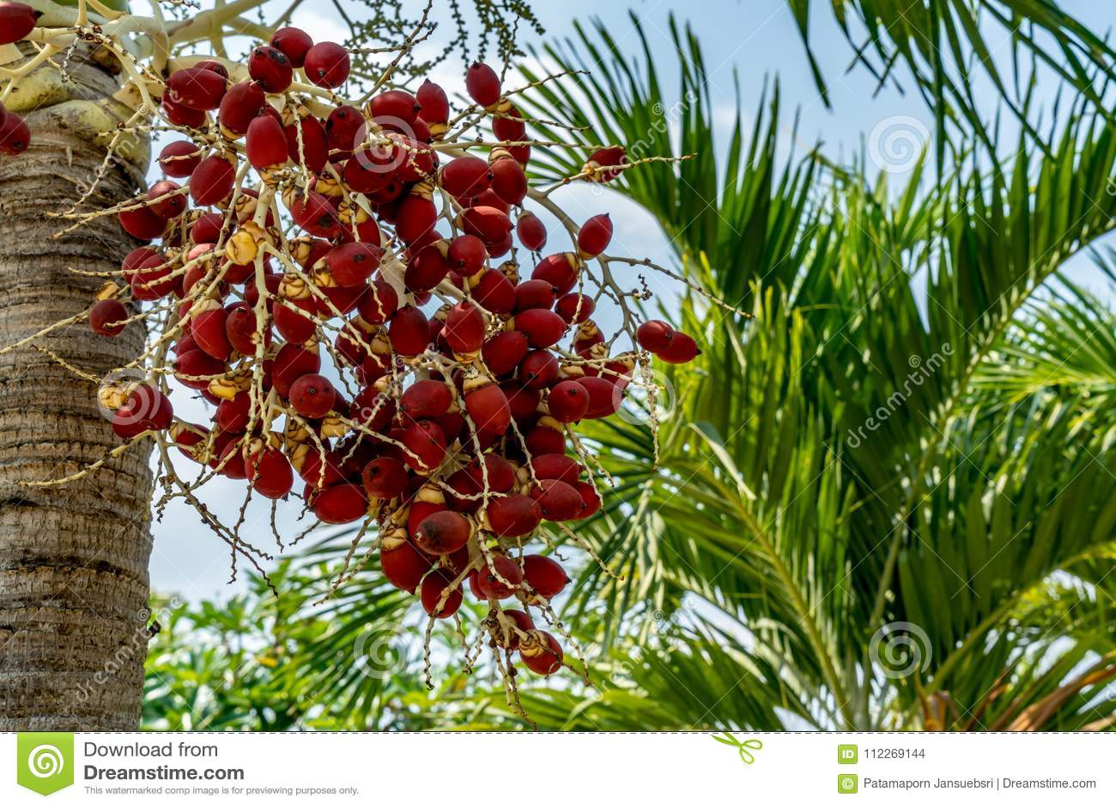 Fruta de la palmera