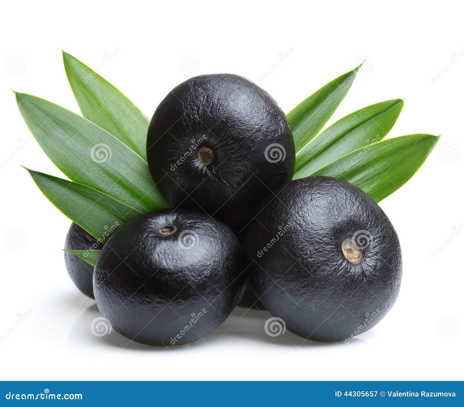 Fruta del acai del Amazonas con la hoja