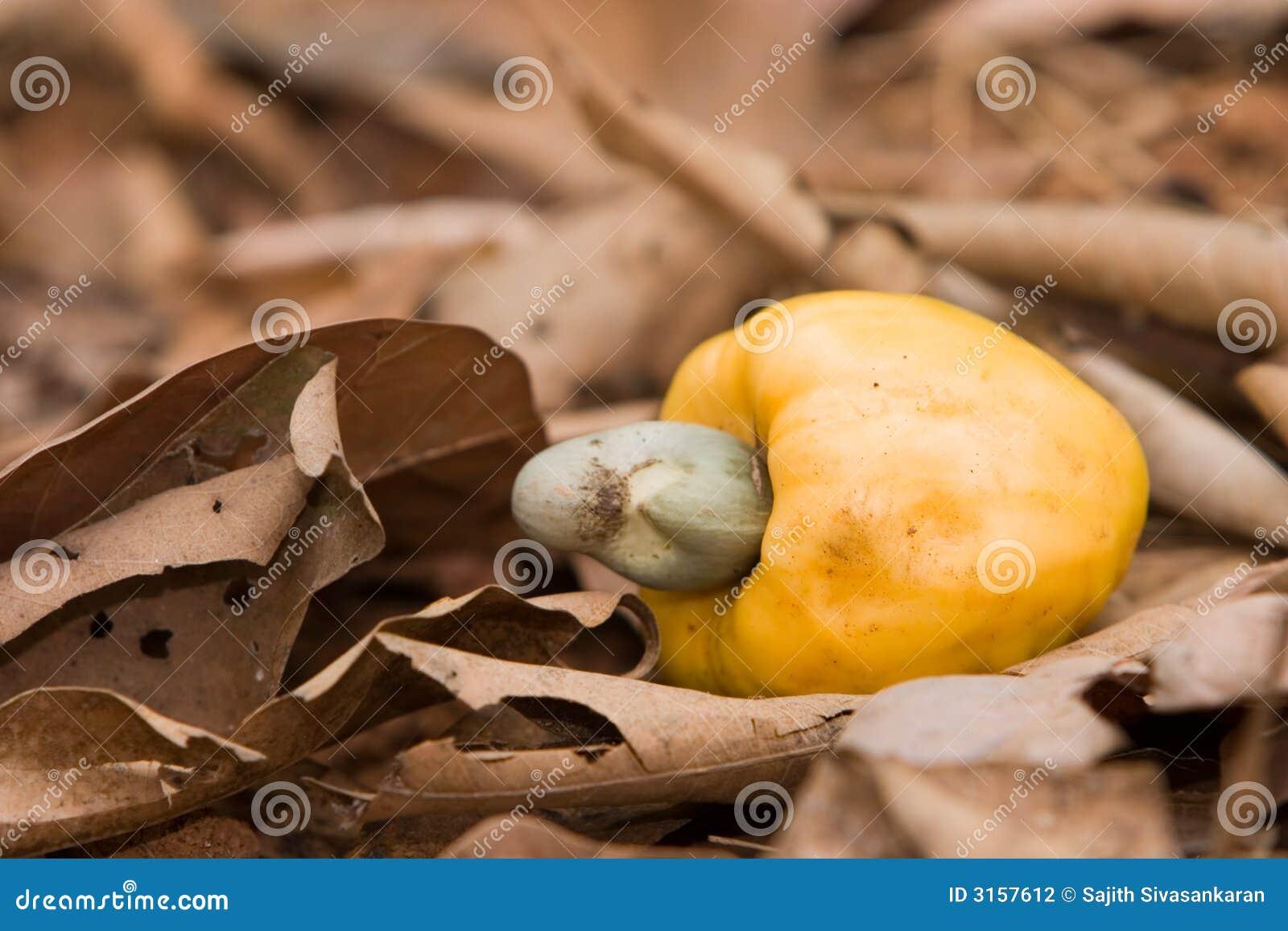 Fruta del anacardo