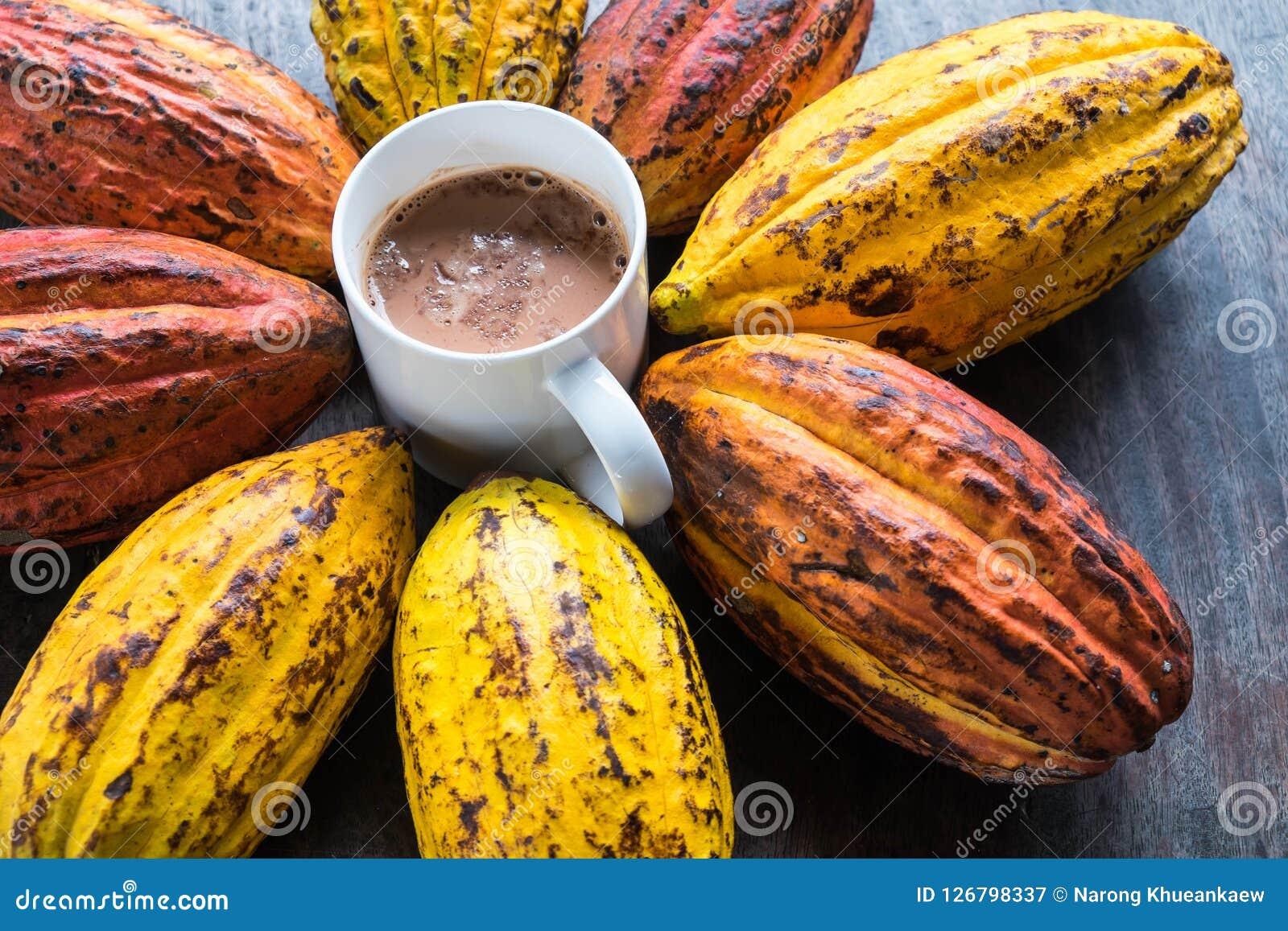 Fruta del cacao y granos de cacao con una taza de cacao caliente
