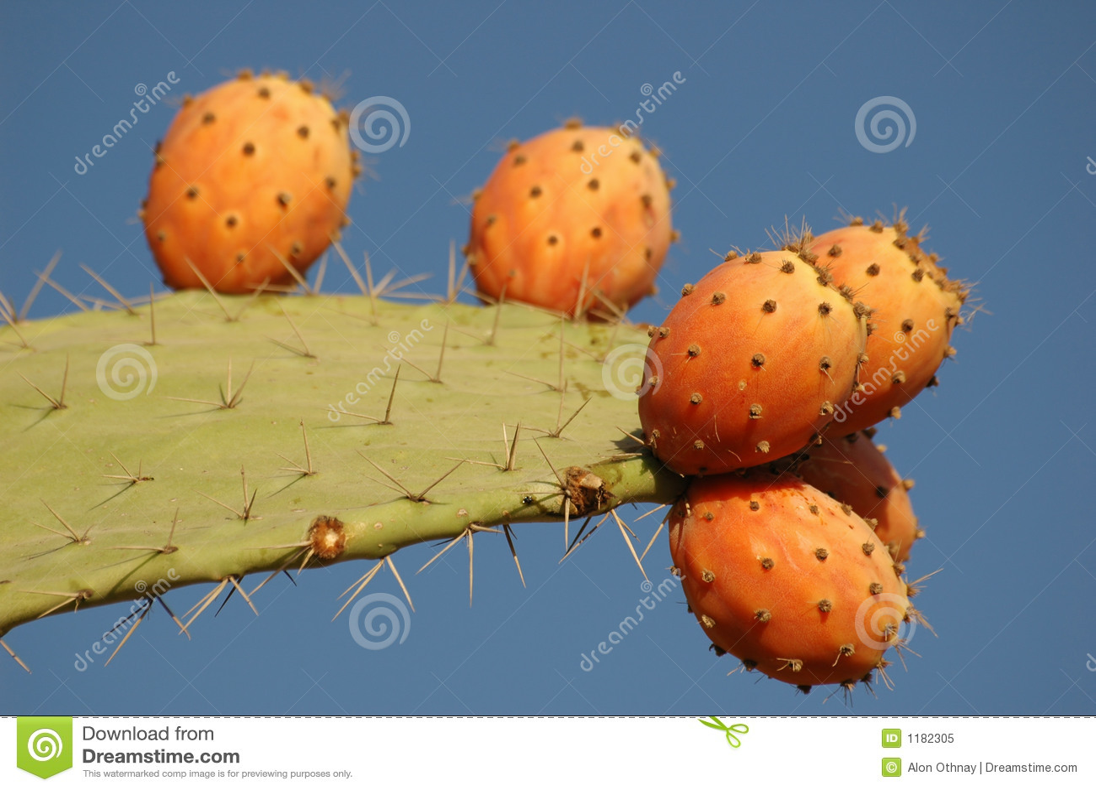 Fruta do cacto