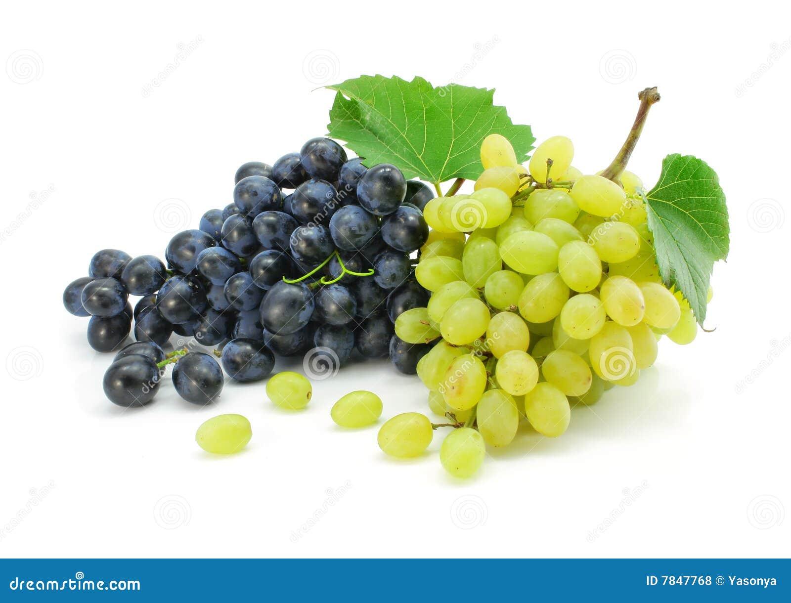 Frutas azuis e verdes da uva isoladas foto de stock - Calorie uva bianca da tavola ...