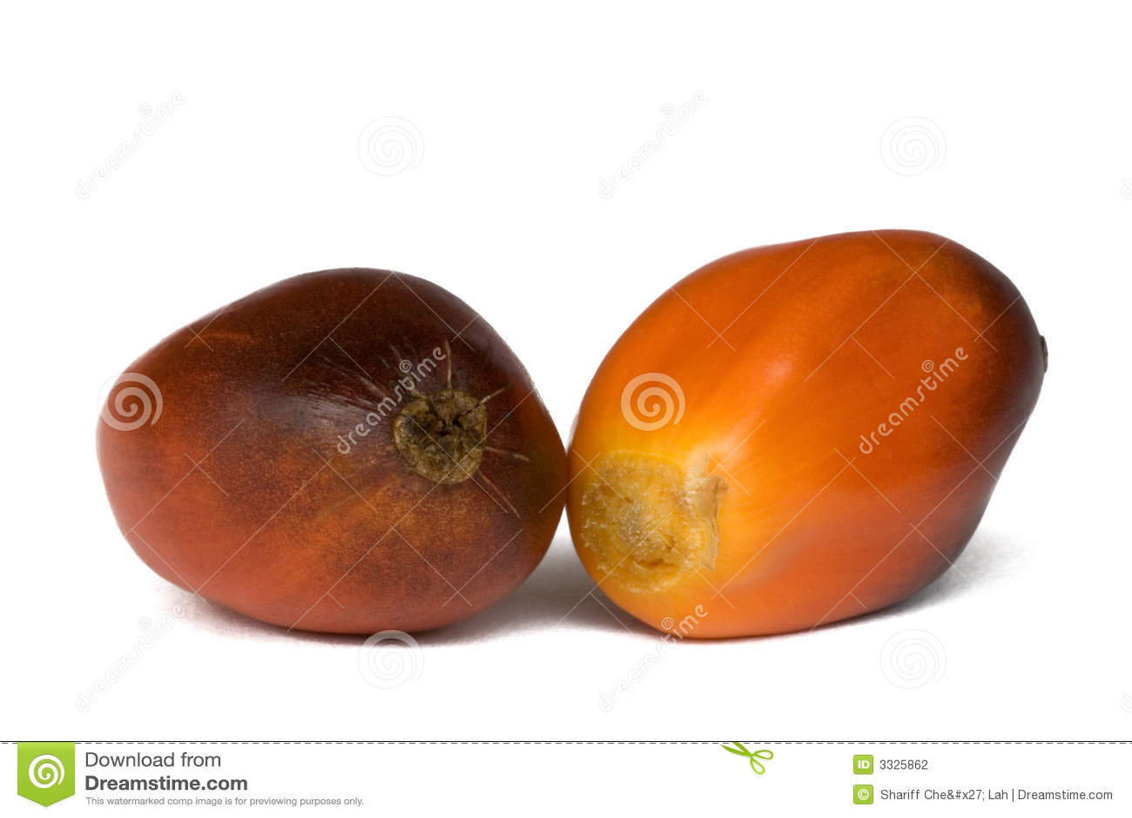 Frutas da palma de petróleo