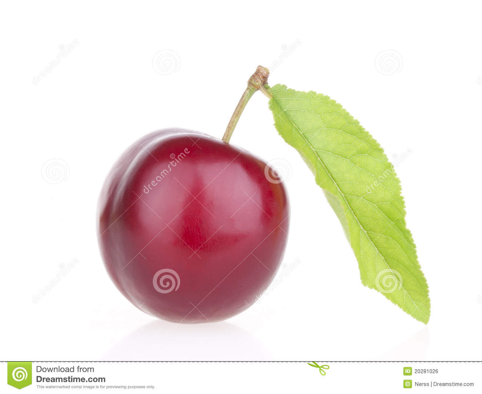 Frutas del ciruelo con la hoja