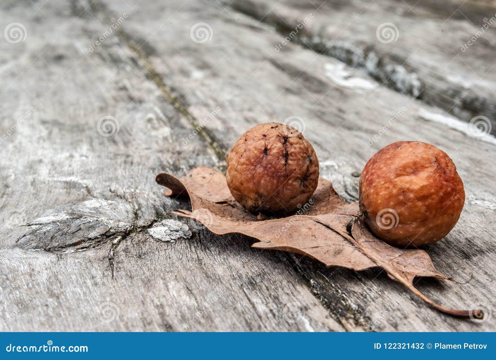 Frutas salvajes