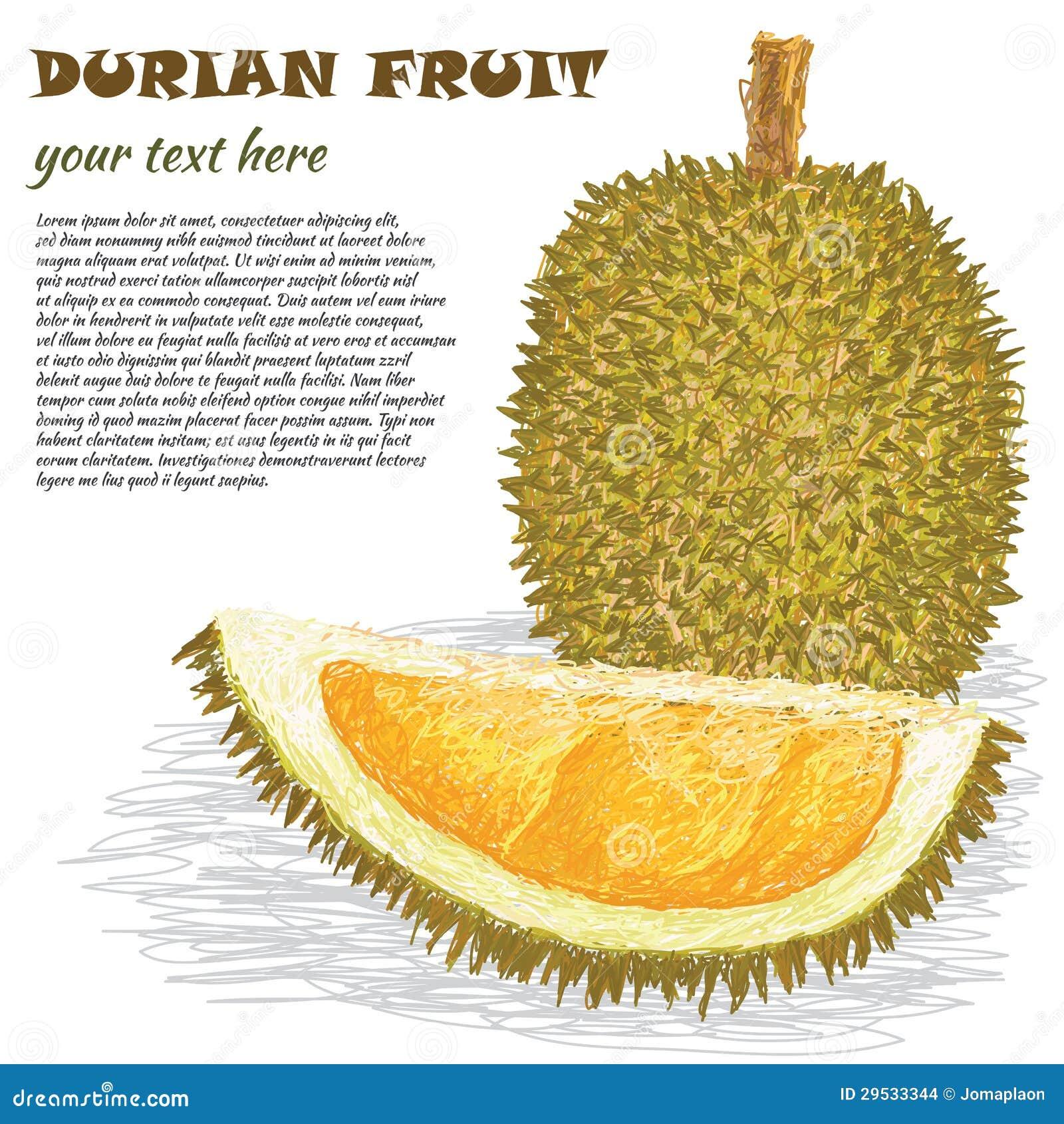 Fruto do Durian