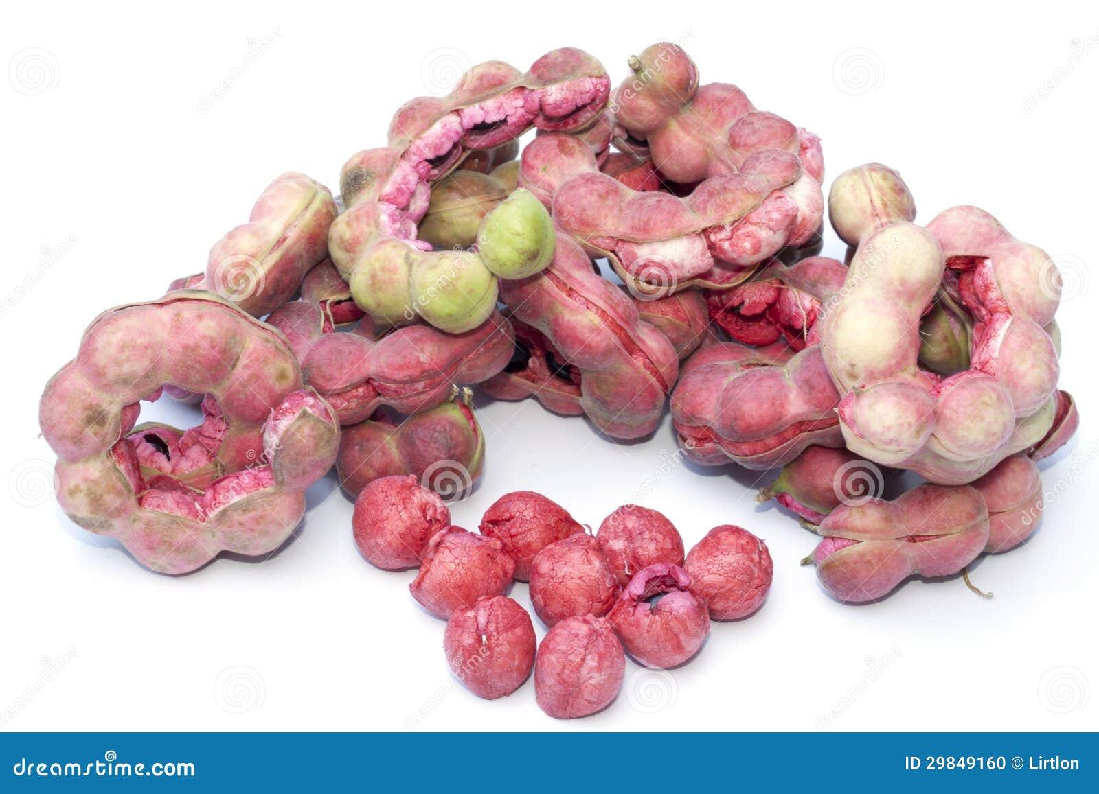 Fruto do tamarind de Manila isolado