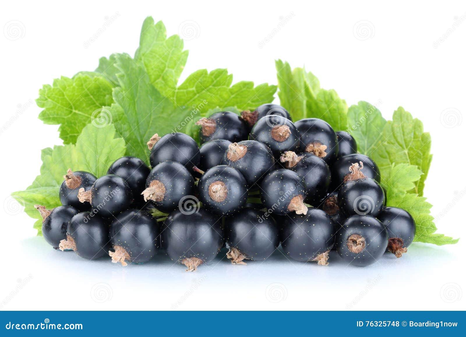 Fruto dos frutos de bagas dos corintos do corinto preto isolado