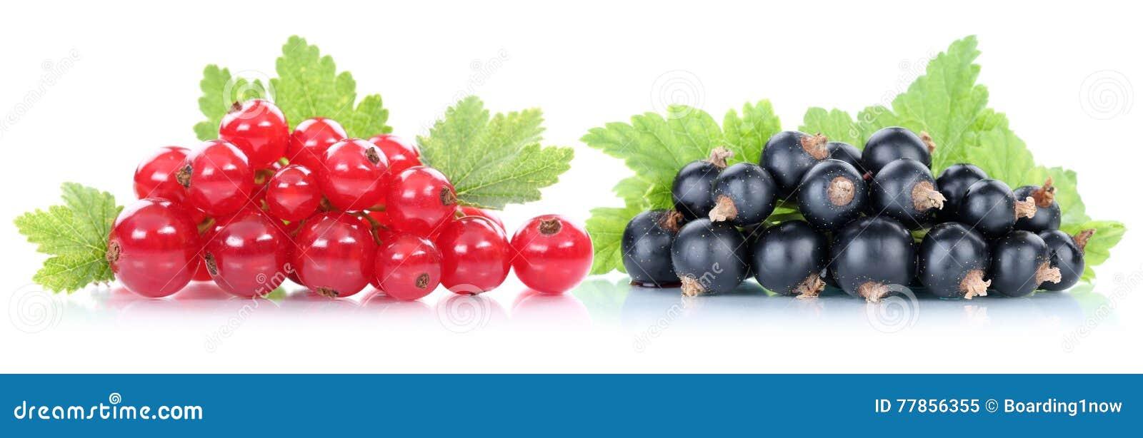Frutos de bagas dos corintos do corinto vermelho e preto
