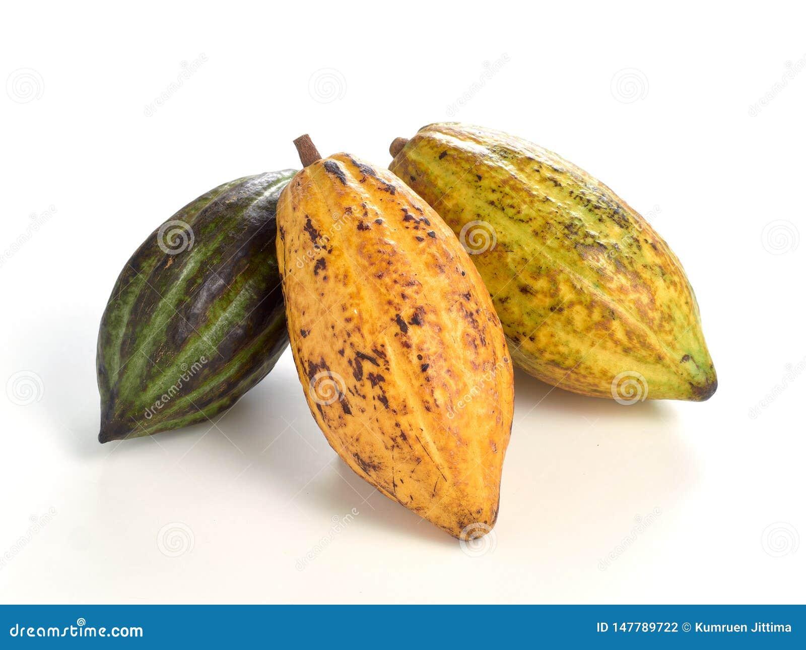 Frutos frescos do cacau