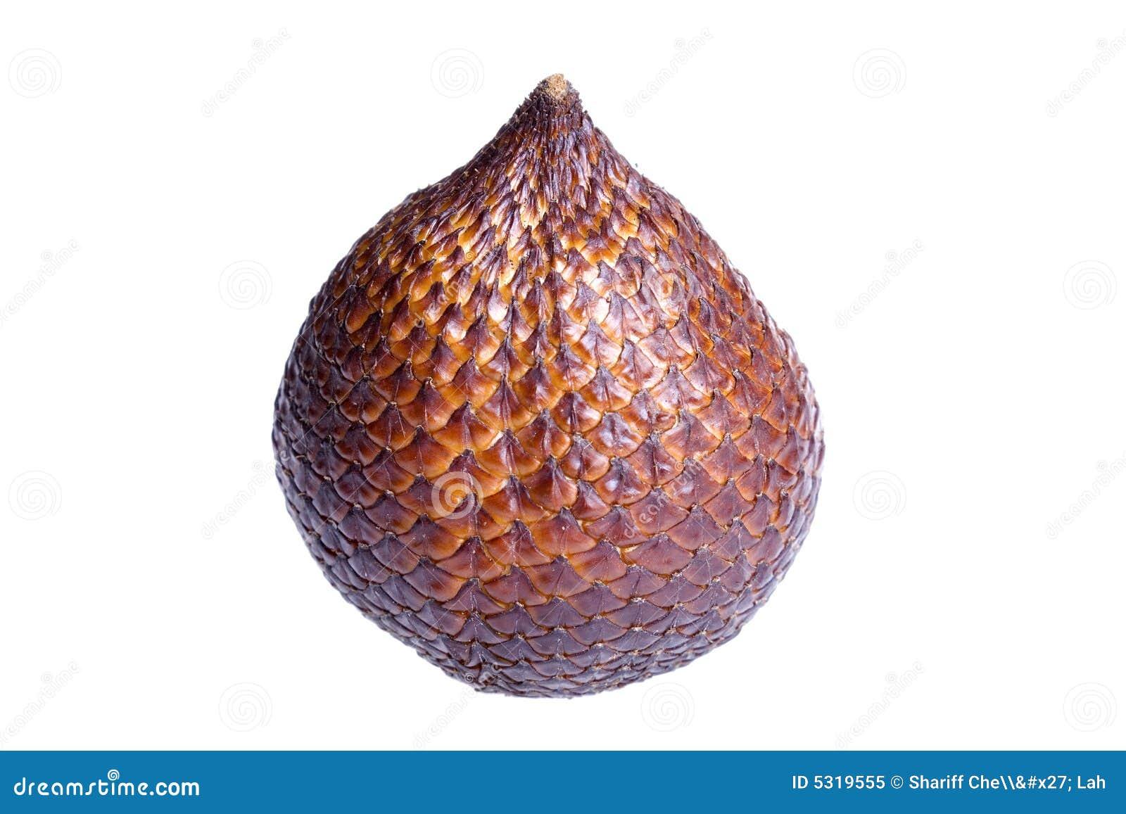 Download Frutta Del Serpente Dalla Palma Di Salak Immagine Stock - Immagine di serpente, maturo: 5319555