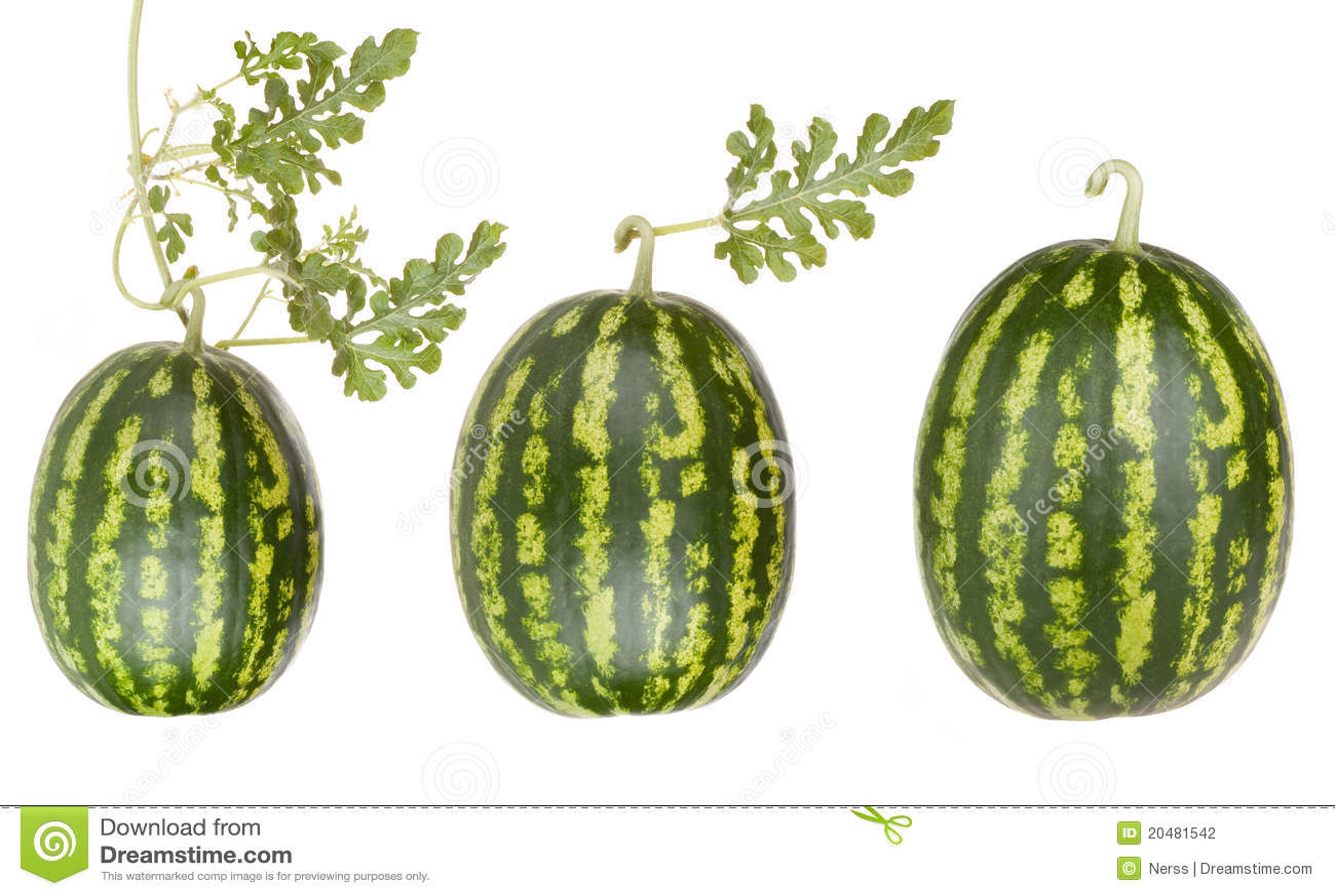 Frutta dell anguria con i fogli