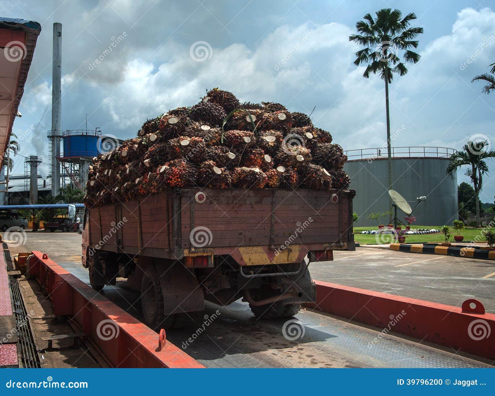 Frutta della palma sul camion