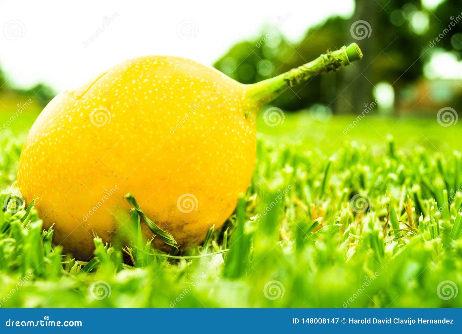 Frutta gialla sul prato