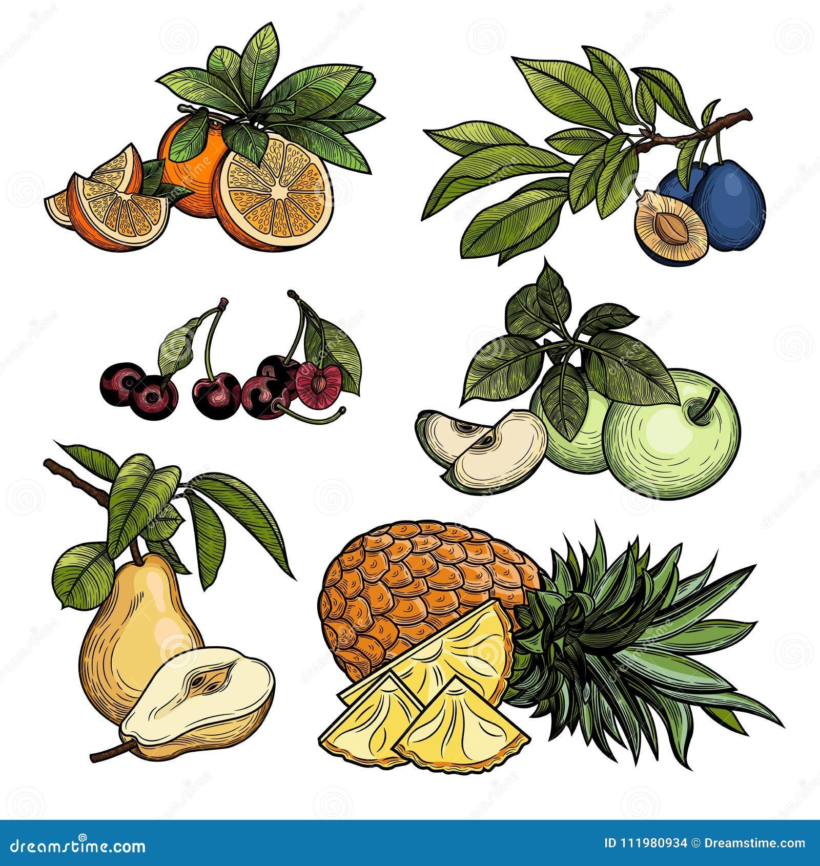 Frutta Illustrazione di vettore