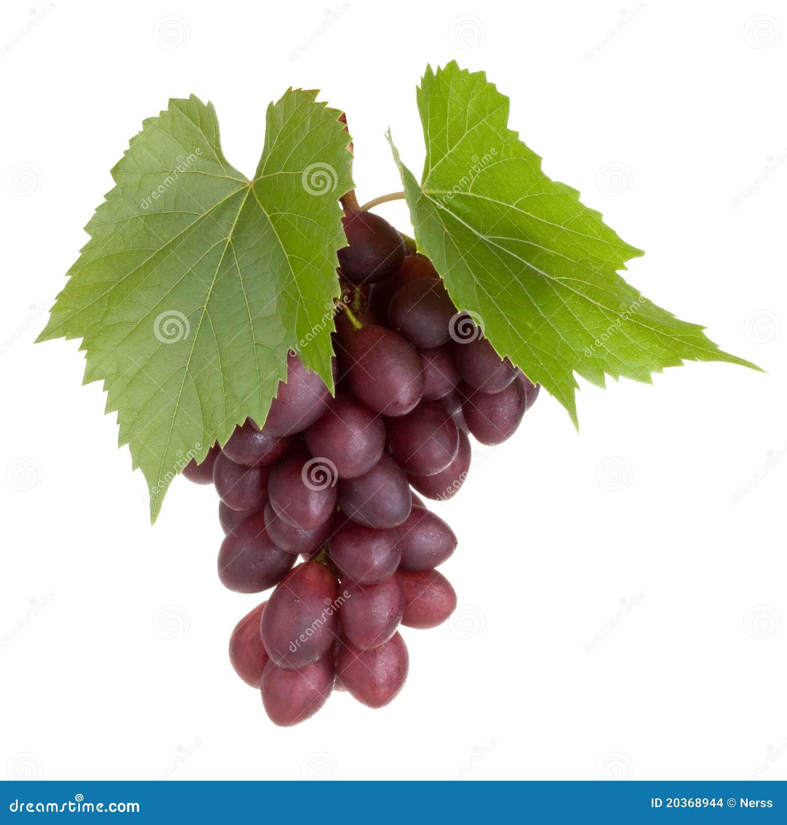 Frutta nera dell uva con i fogli