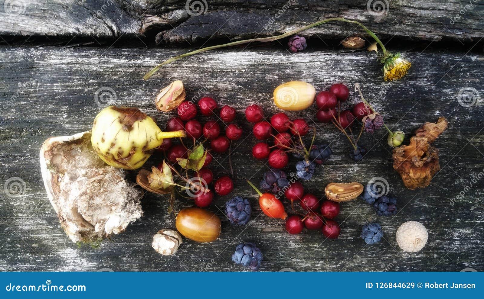Frutti di legno su un banco