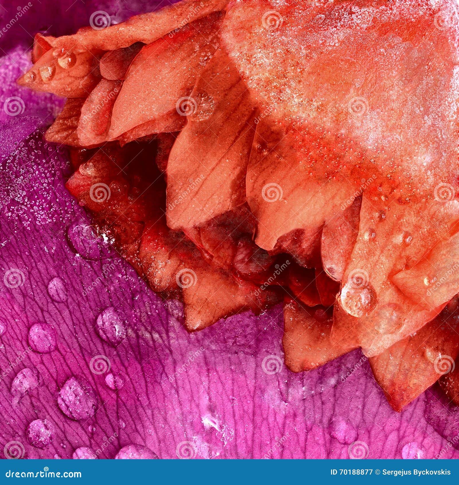 Fryst blomma