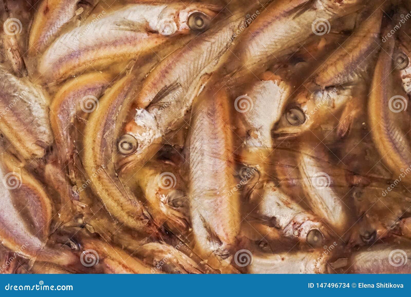 Fryst fisk briquettes