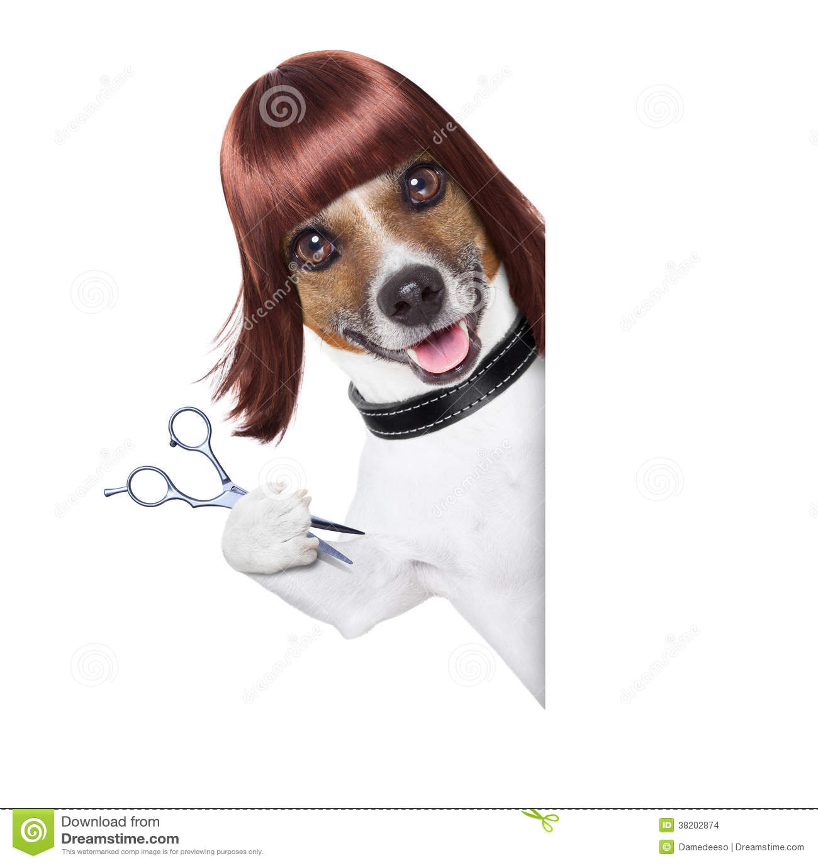 Fryzjera pies
