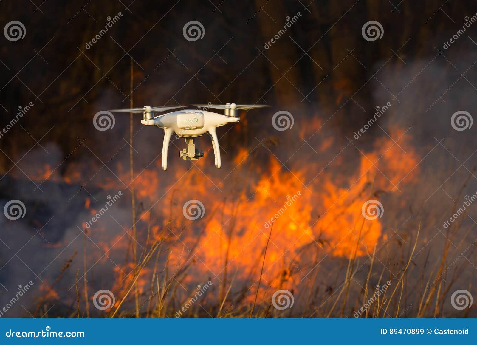 Fuco di volo in un fuoco