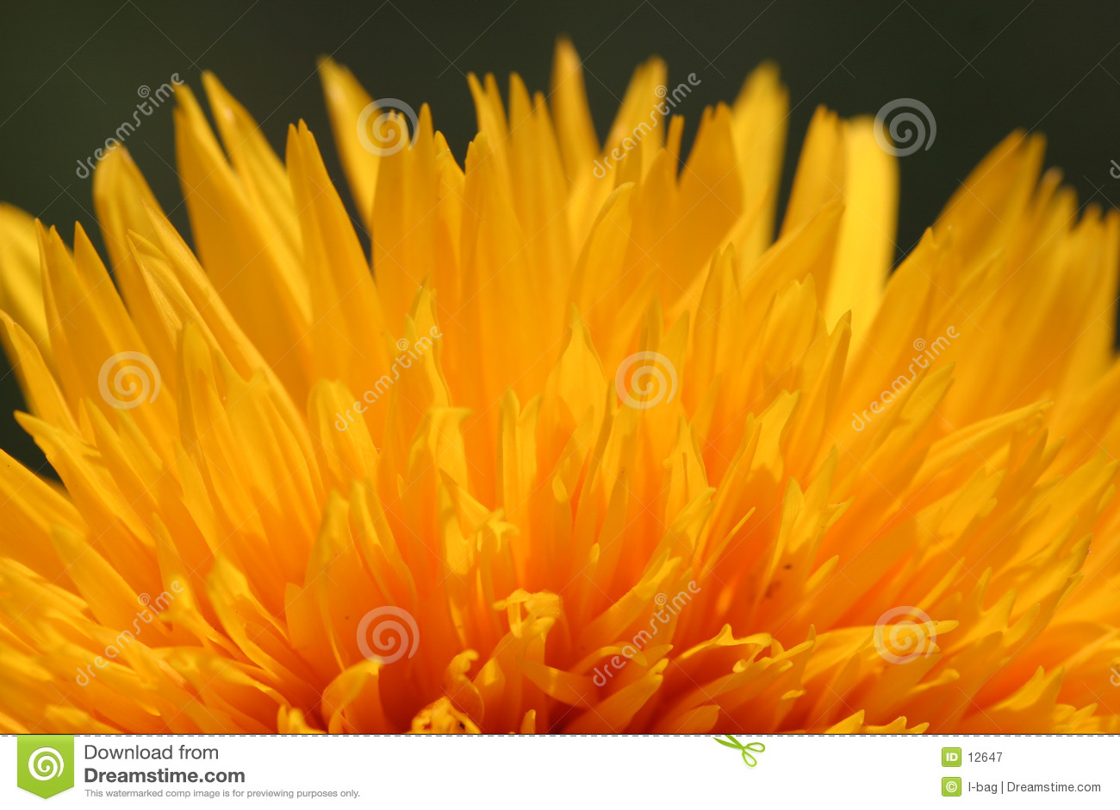 Fuego del flor
