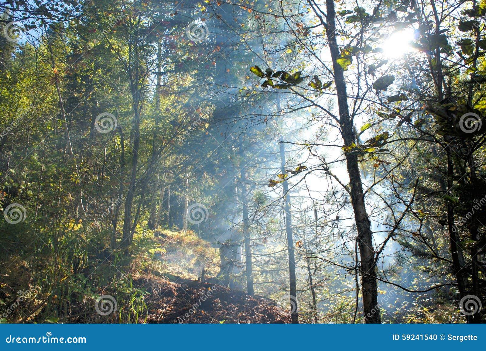 Fuego en el bosque conífero