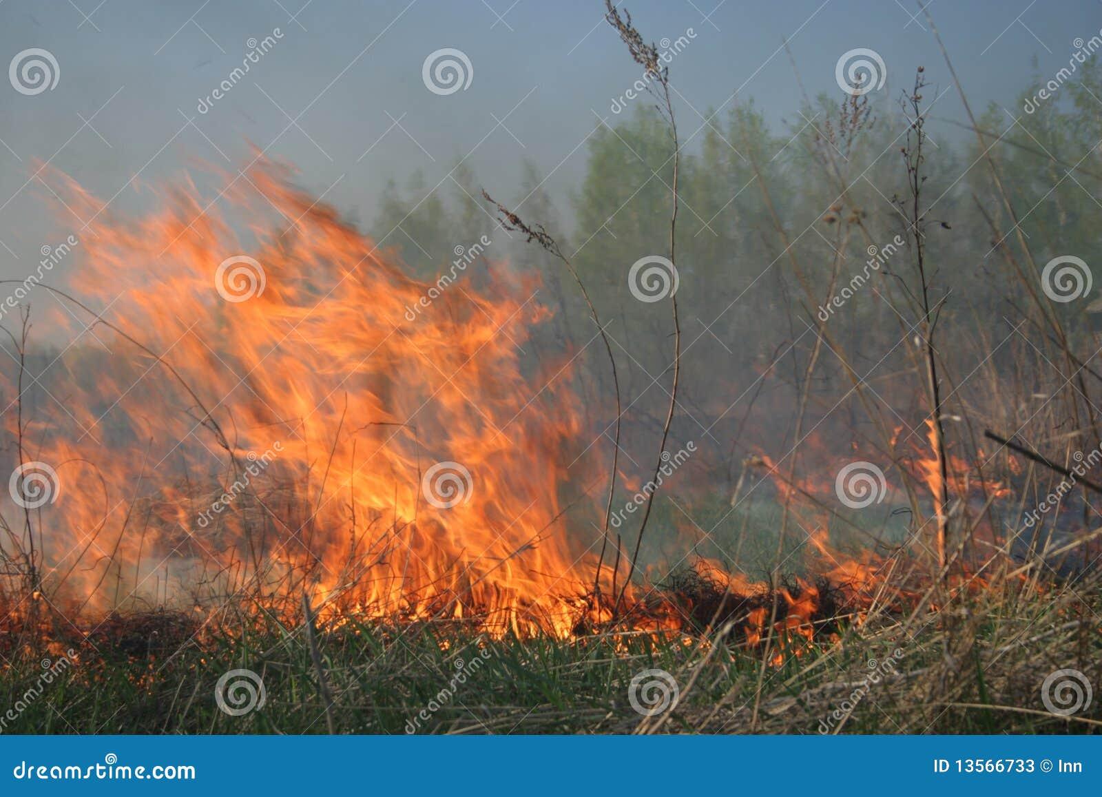 Fuego que se acerca al bosque