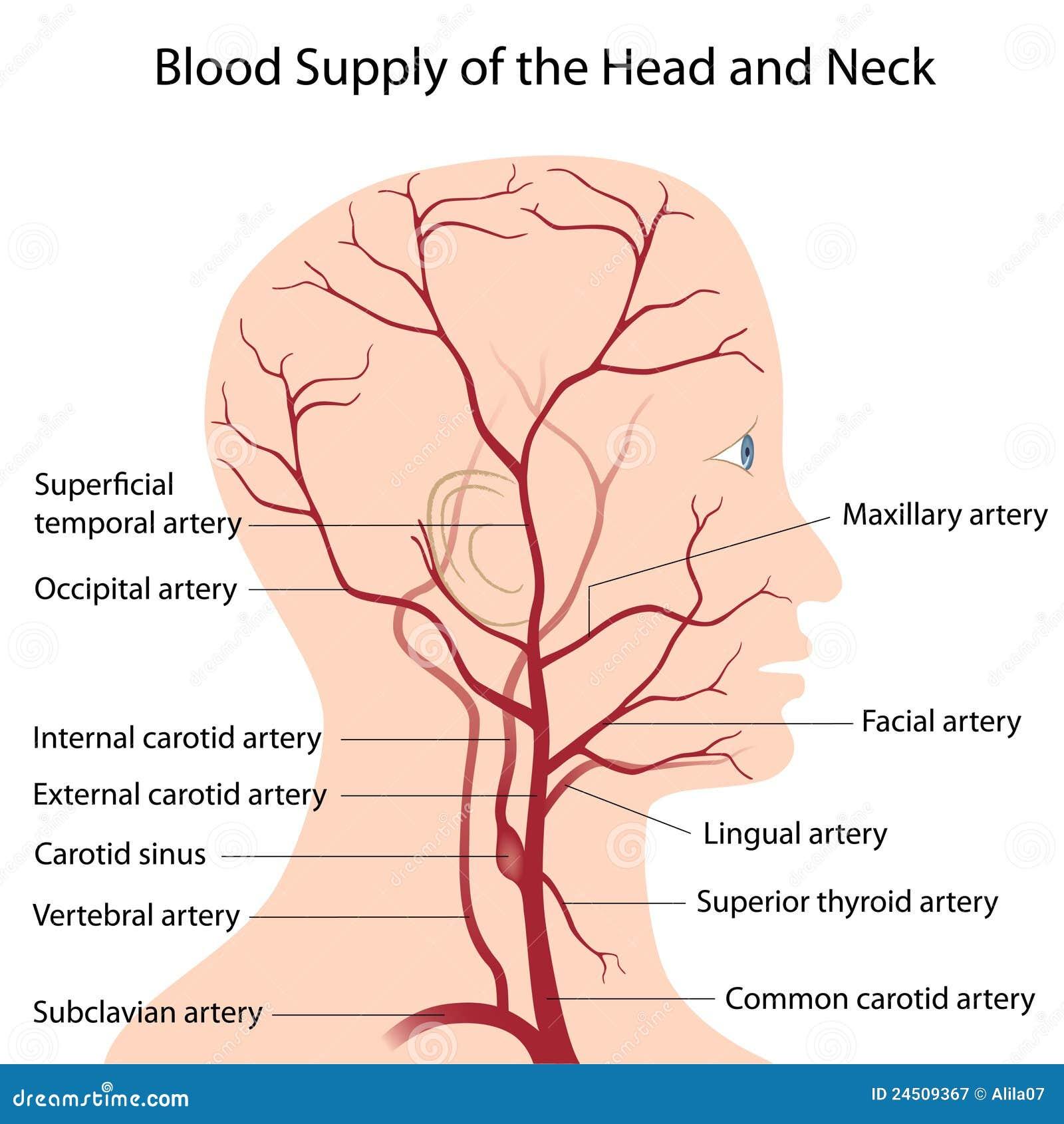 Fuente de sangre de la pista y del cuello