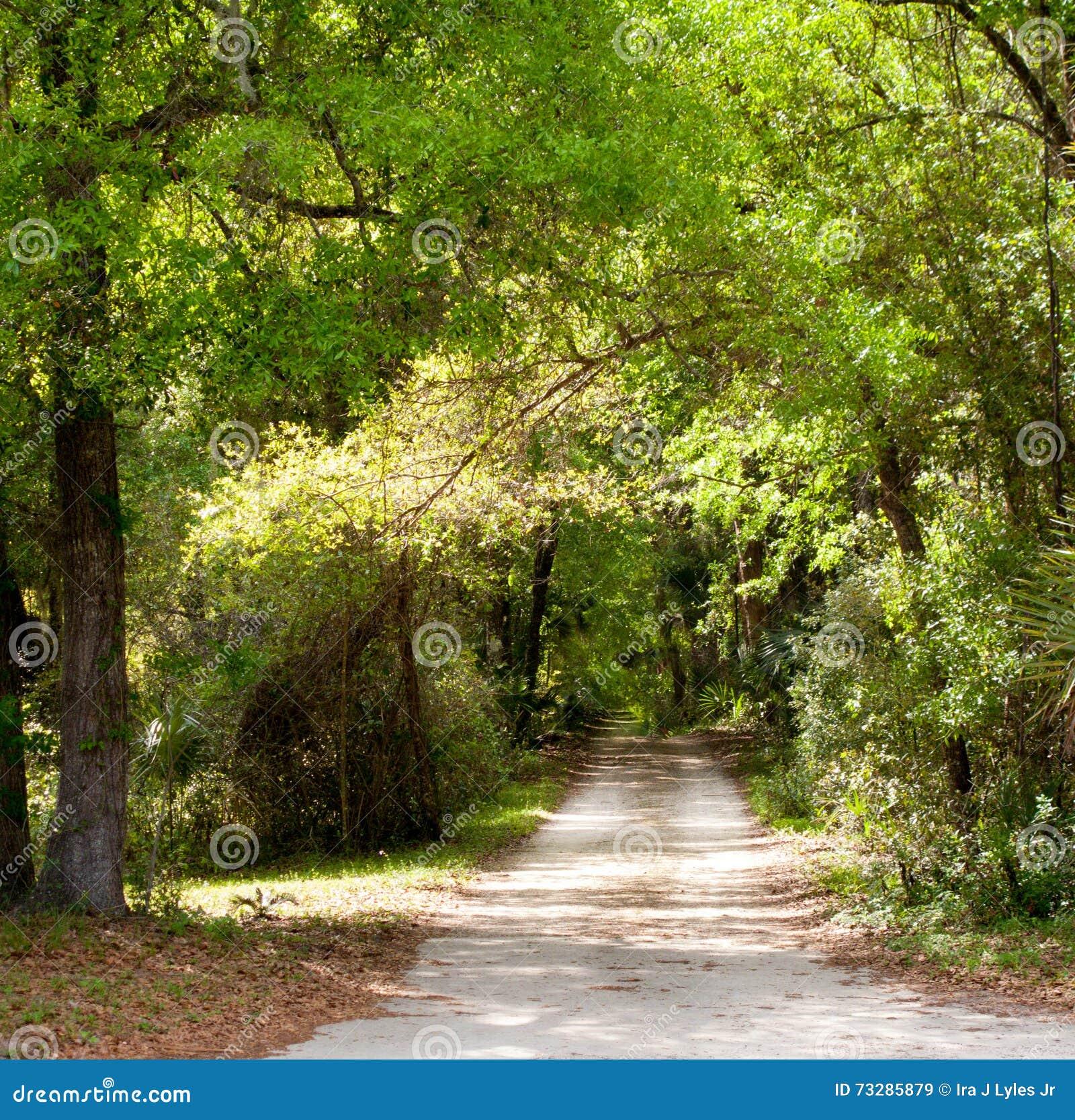 Fuga arborizada