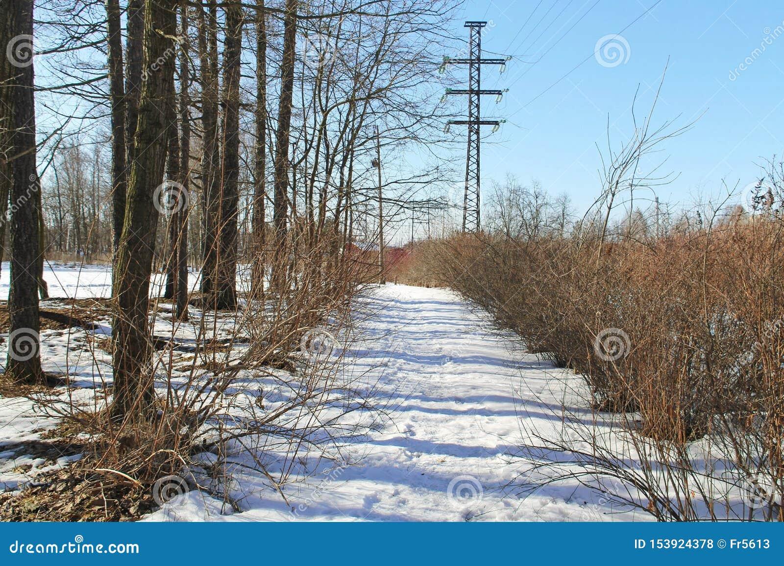 Fuga da neve ao longo de uma fileira dos arbustos e das árvores