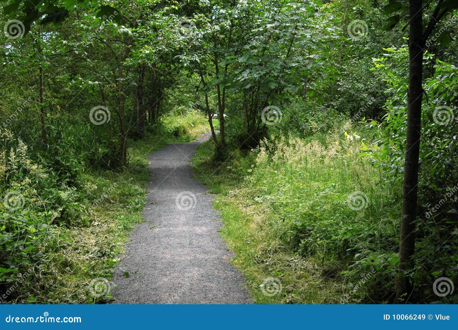 Fuga do caminho com natureza verde em lados