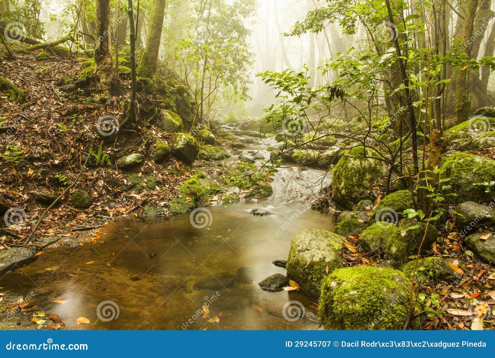 Download Fuga do cedro imagem de stock. Imagem de trekking, musgo - 29245707
