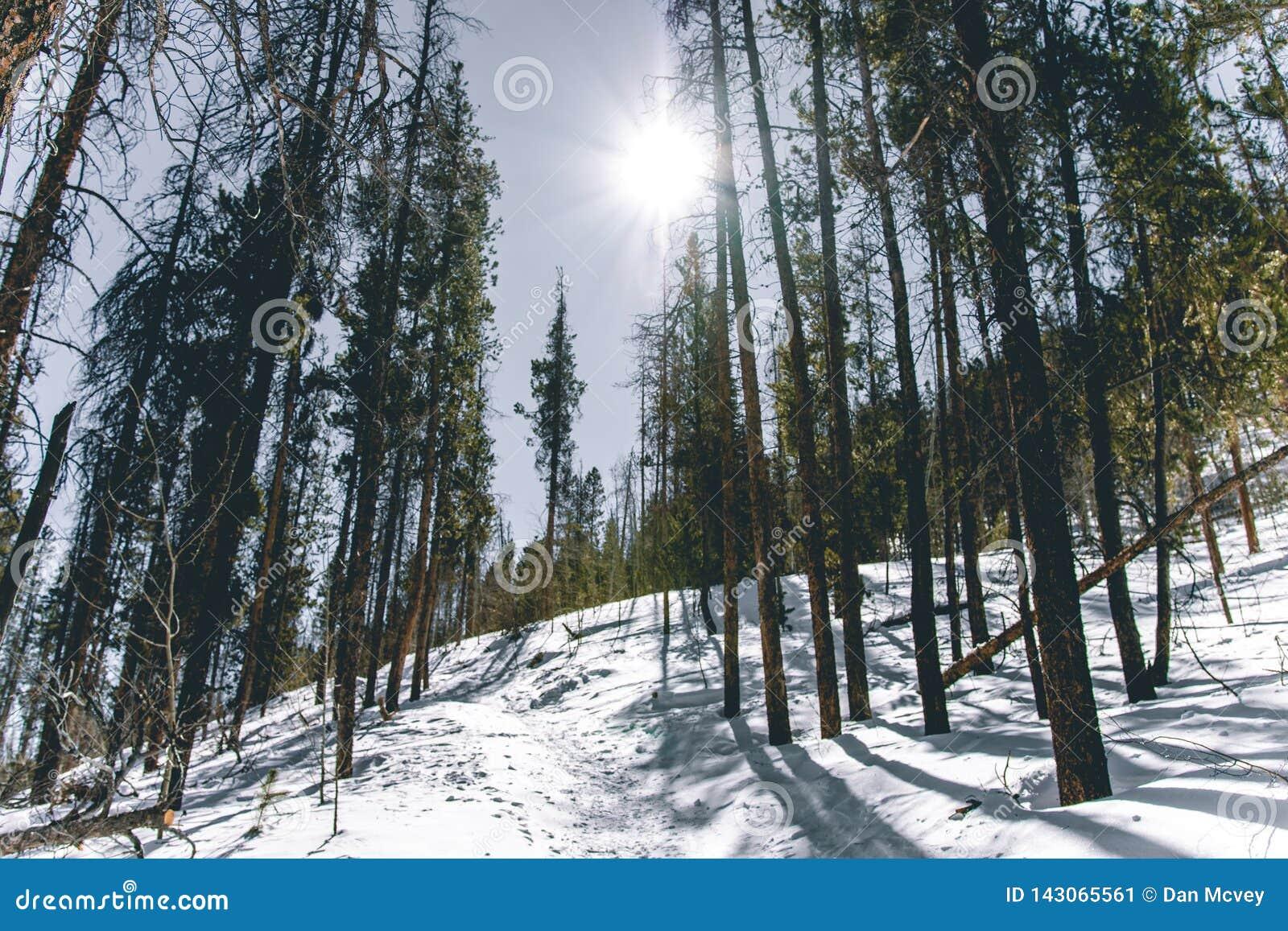 Fuga nevado nas madeiras de Colorado
