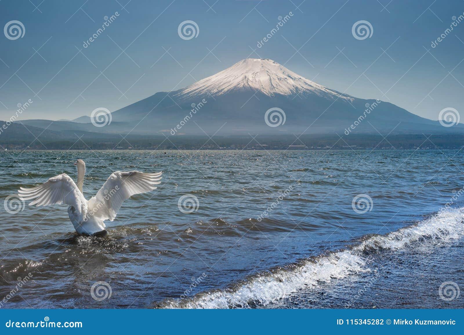 Fuji łabędź
