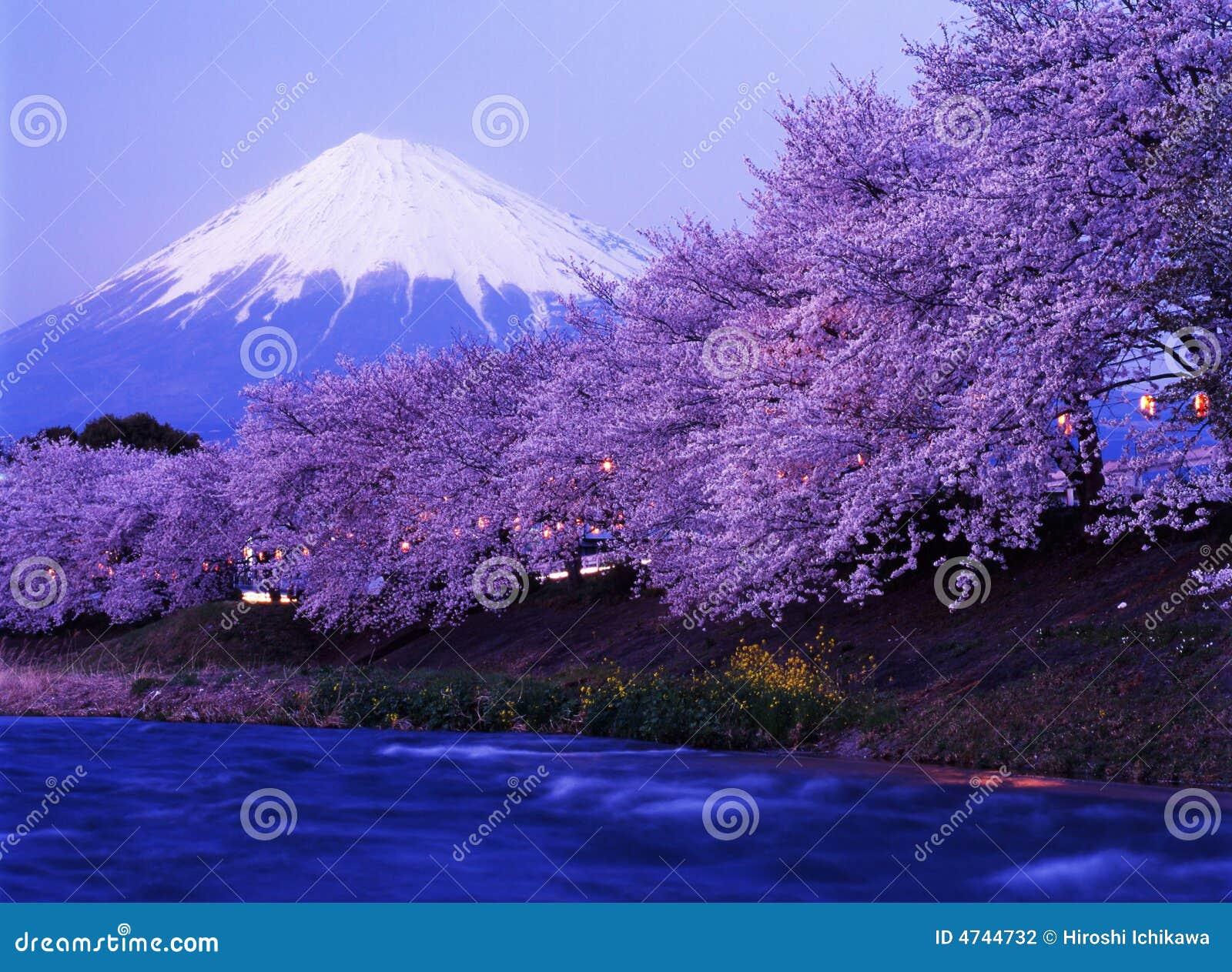 Fuji 233 mt